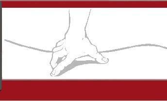 Praxis für Physiotherapie Heidecker